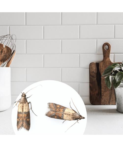 Zapach P+L Clementine 270ml